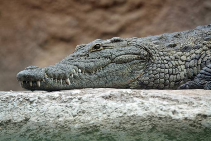 صورة كاميرا خفية التمساح , اضحك من قلبك مشاهد طريفة و مضحكة