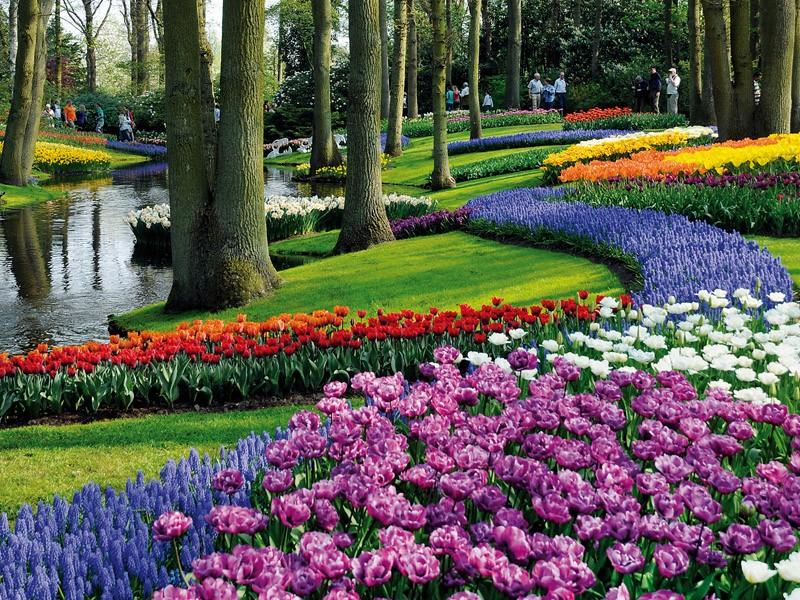 صوره حديقة كيوكينهوف هولندا , صور من الخيال الطبيعي الساحر