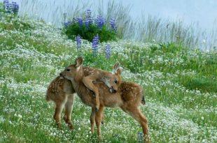 بالصور الرحمة عند الحيوانات , صور معبرة سبحان الله 3341 13 310x205
