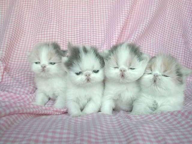 صورة صور قطط بيبي , روائع الطفولة في الحيونات