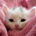 صور قطط بيبي , روائع الطفولة في الحيونات