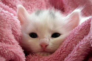 صوره صور قطط بيبي , روائع الطفولة في الحيونات