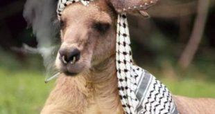 صوره اضحك مع غير البشر , مواقف طريفة للحيوانات المختلفة