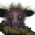 صور حيوانات نادرة , شاهد عجائب المخلوقات