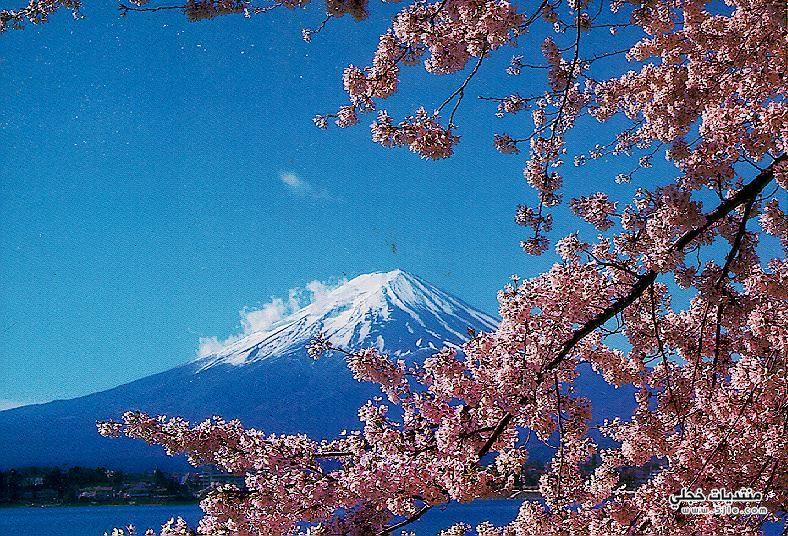 بالصور صور من اليابان , موسم تفتح ازهار الكرز 3390 3