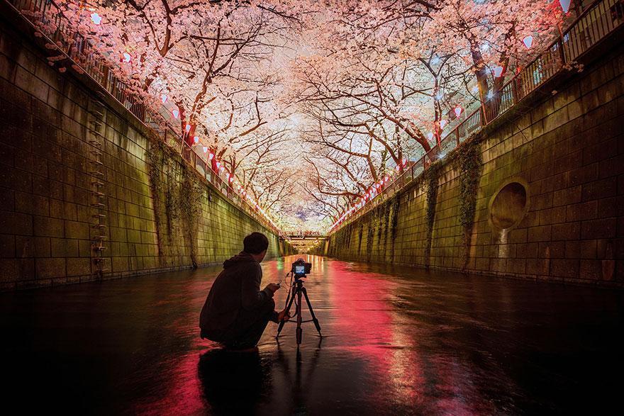 بالصور صور من اليابان , موسم تفتح ازهار الكرز 3390 7