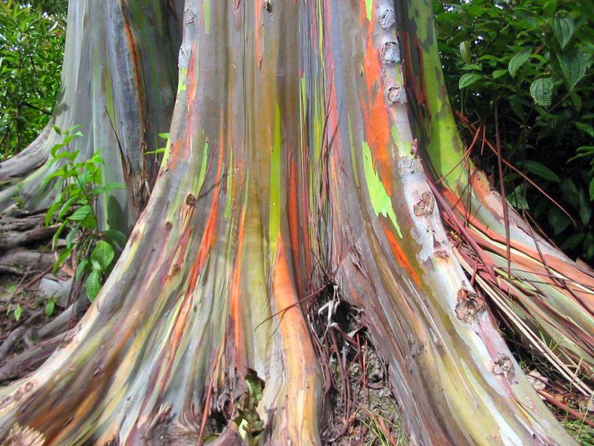 صور شجرة قوس قزح , ظاهرة رائعة وعجيبة