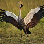 صور اجمل الطيور , اشكال و انواع نادرة