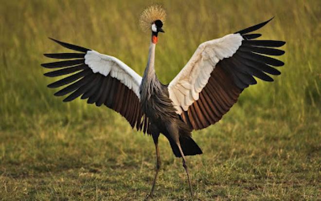 صورة صور اجمل الطيور , اشكال و انواع نادرة
