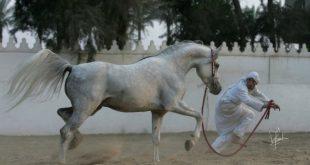 صوره عندما يغضب الحصان , مشاهد لم تراها من قبل