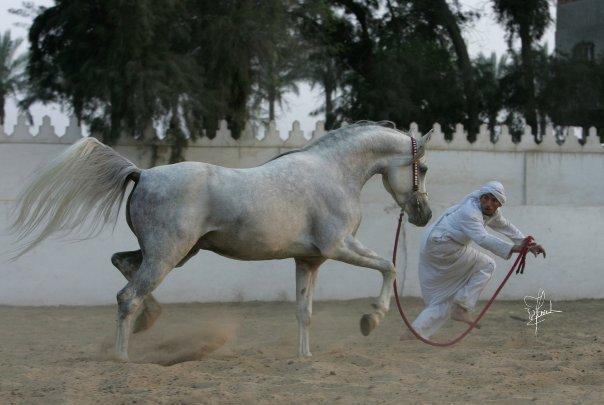 بالصور صور الحصان الطائر , احلى صور للحصان الطائر 3491 10