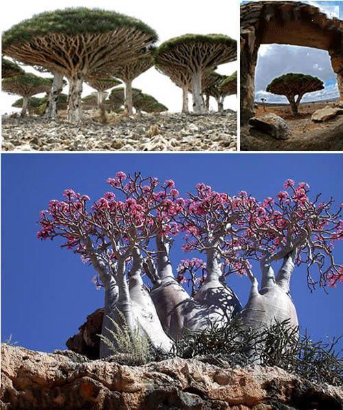 صوره اغرب عشر اماكن فى العالم , مناظر عجيبة وجميلة