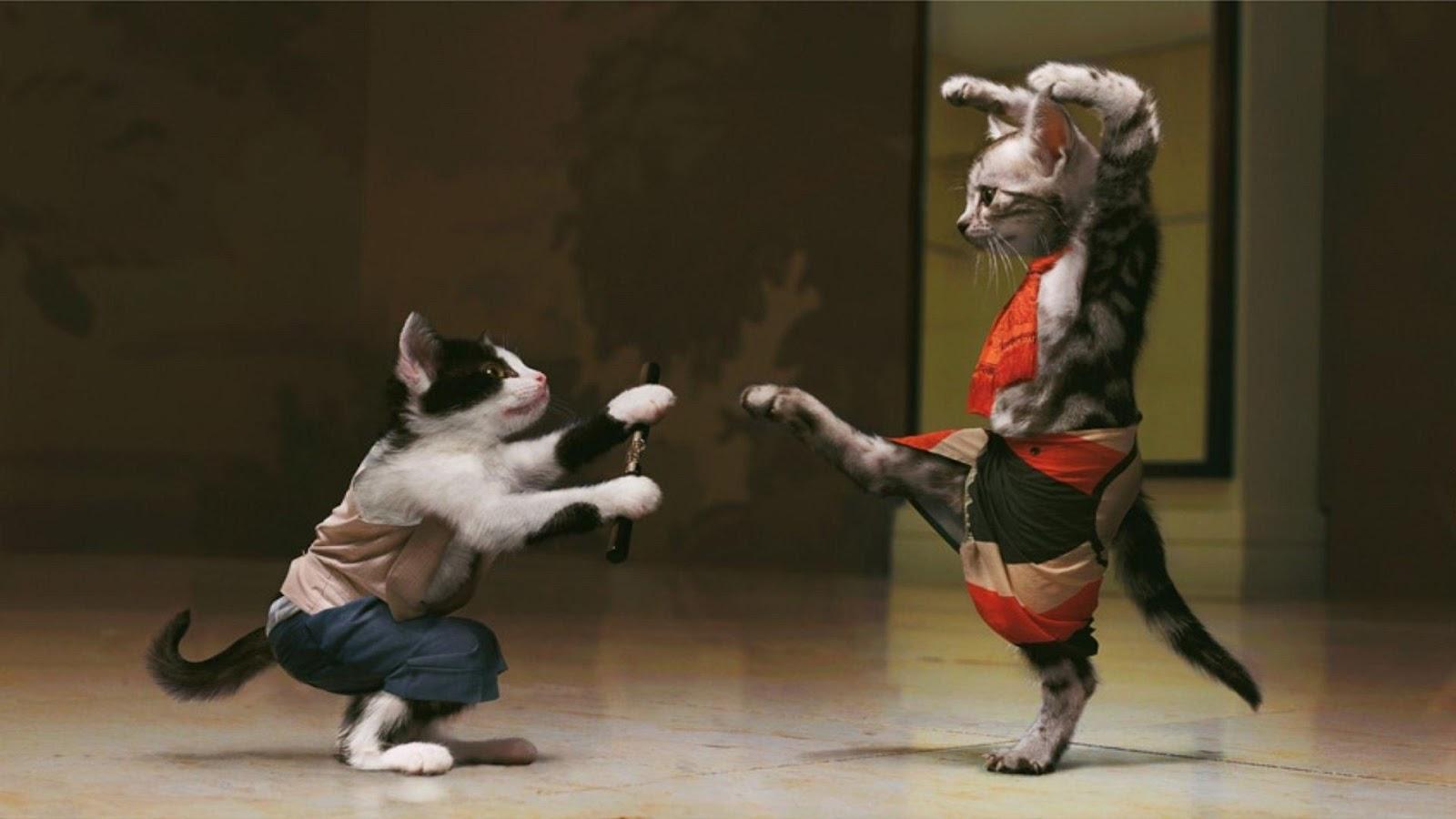 بالصور افضل الصور المضحكة في العالم , اضحك مع اجمل الصور 3630 3
