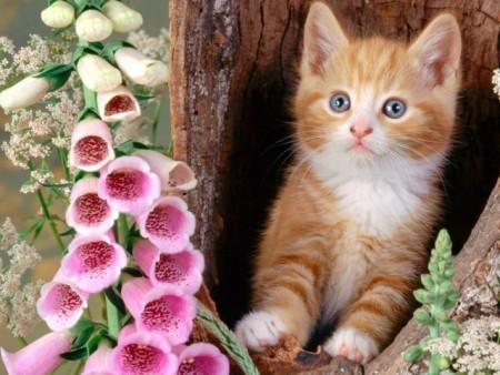 صور احلى صور قطط , احدث خلفيات للحيوانات االاليفه