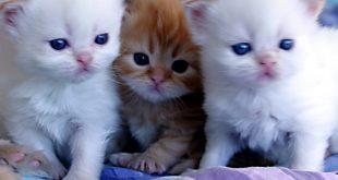 احلى صور قطط , احدث خلفيات للحيوانات االاليفه