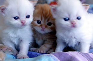 صوره احلى صور قطط , احدث خلفيات للحيوانات االاليفه