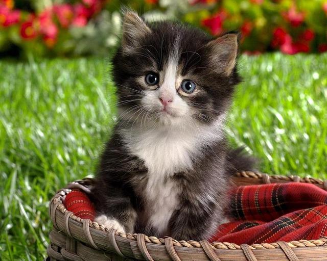 صوره صور احلى قطط , تعالو نشوف الصور المختلفة لهذة المخلوقات الجميلة