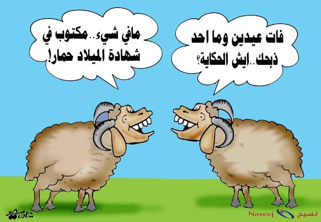 بالصور صور خروف العيد اضحك من قلبك مع صور عيد الاضحي 3677 3