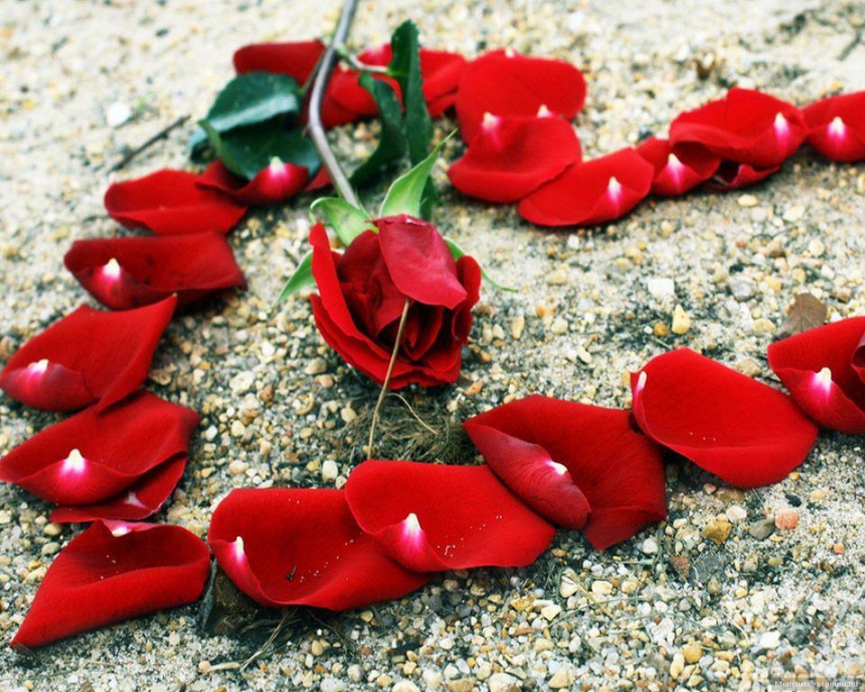 بالصور اجمل الصور الرومانسية , صور تعطي احساس بالحب الكبير 3720 3