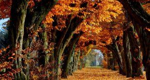 صور اشجار حلوه , مناظر وبوستات طبيعية جدا
