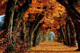 صوره صور اشجار حلوه , مناظر وبوستات طبيعية جدا
