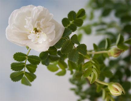 بالصور ورود من الطبيعة , اجمل صور لزهور جميلة 3752 2