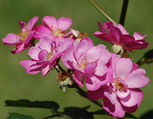 بالصور ورود من الطبيعة , اجمل صور لزهور جميلة 3752 3