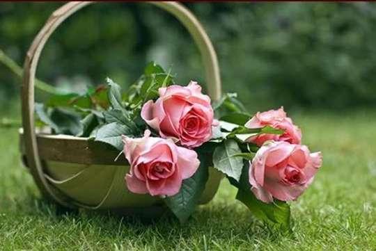 بالصور ورود من الطبيعة , اجمل صور لزهور جميلة 3752 5