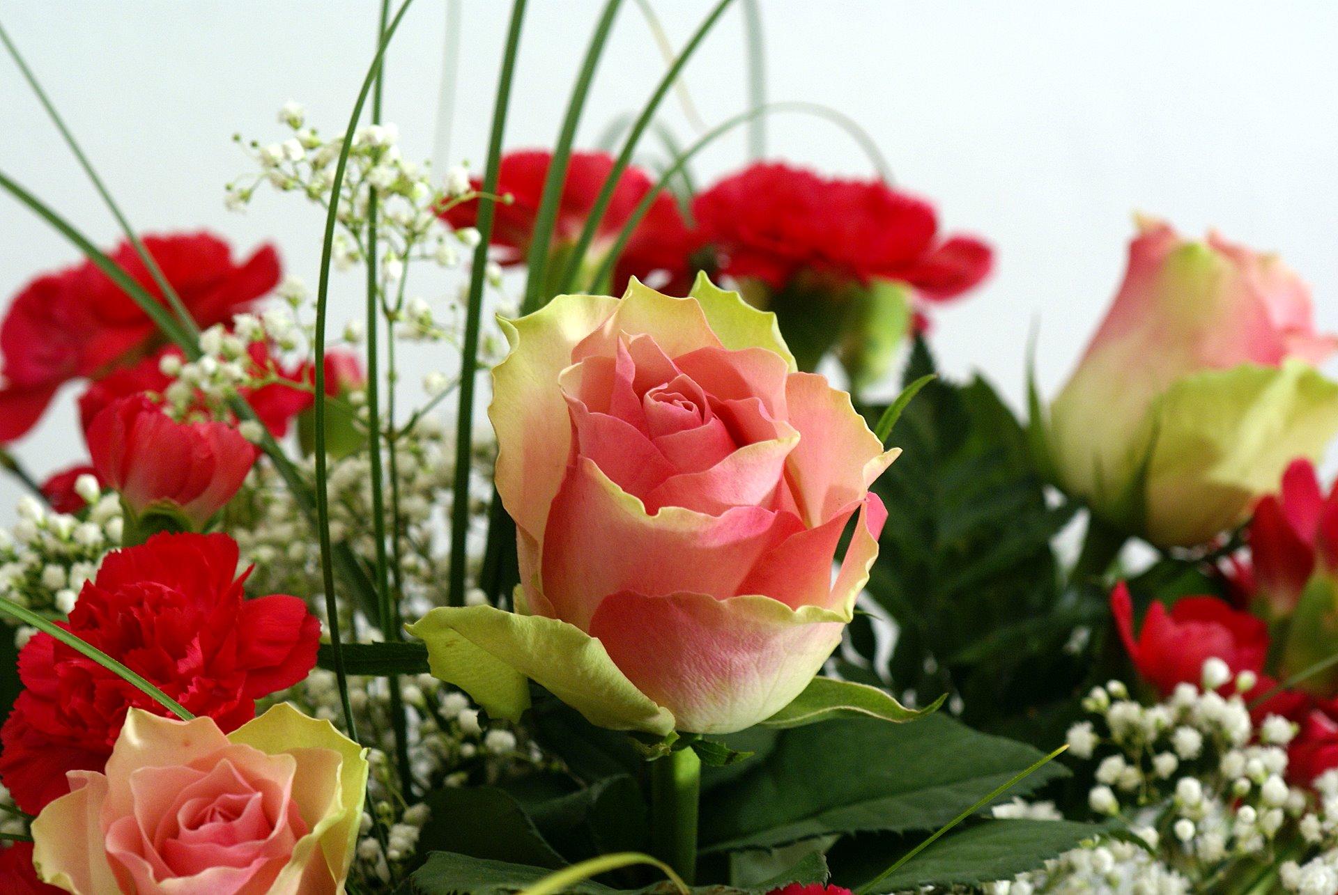 بالصور ورود من الطبيعة , اجمل صور لزهور جميلة 3752 6