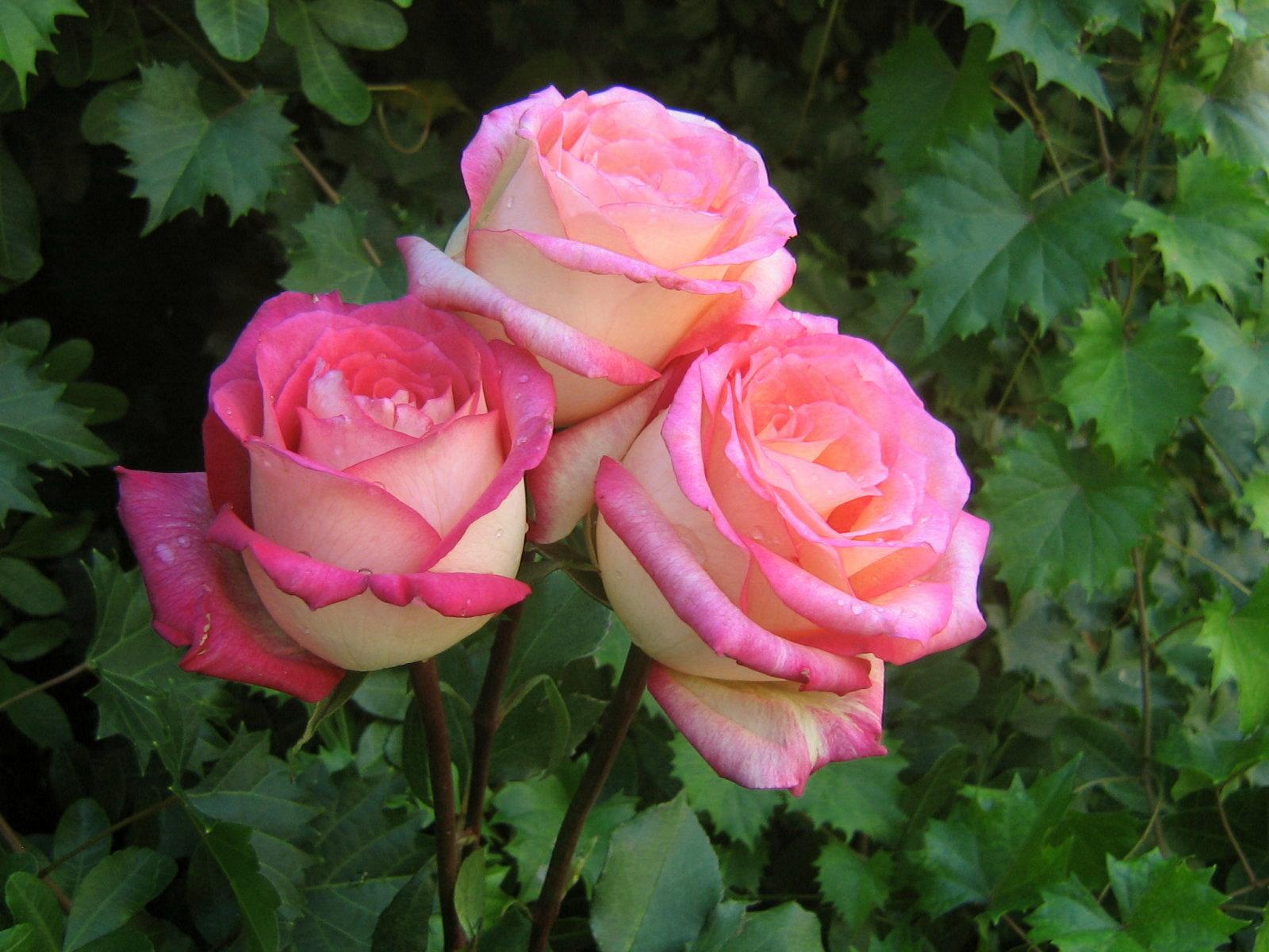 بالصور ورود من الطبيعة , اجمل صور لزهور جميلة 3752 9