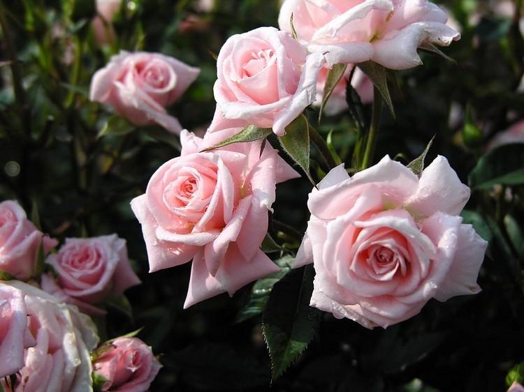 صوره ورود من الطبيعة , اجمل صور لزهور جميلة