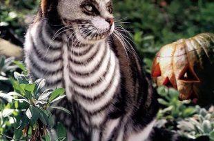 صوره الرسم على القطط , اليكم ياعشاق الحيوانات