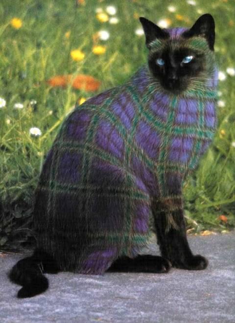 بالصور الرسم على القطط , اليكم ياعشاق الحيوانات 3778 5