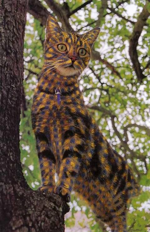 بالصور الرسم على القطط , اليكم ياعشاق الحيوانات 3778 6