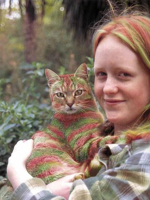 بالصور الرسم على القطط , اليكم ياعشاق الحيوانات 3778 8