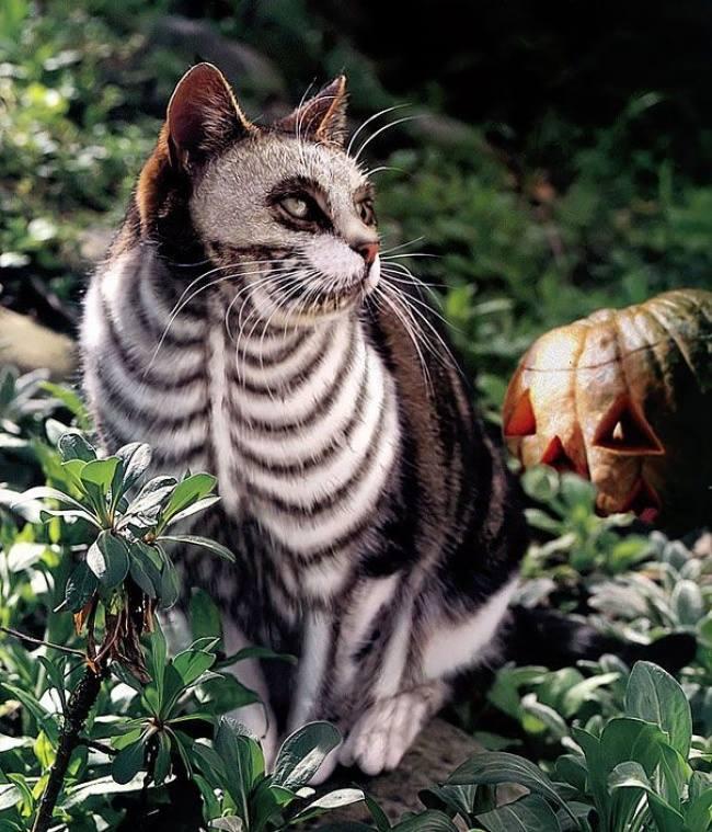 بالصور الرسم على القطط , اليكم ياعشاق الحيوانات 3778