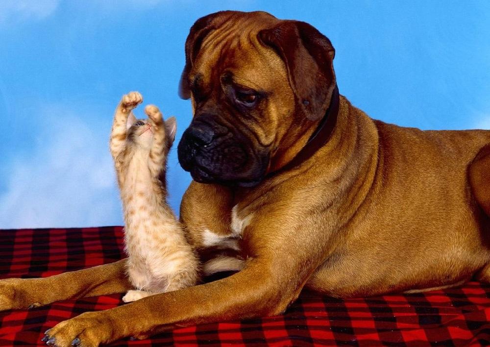 بالصور صور كلاب مضحكة , اضحك من قلبك مع اغرب الصور 3806 1
