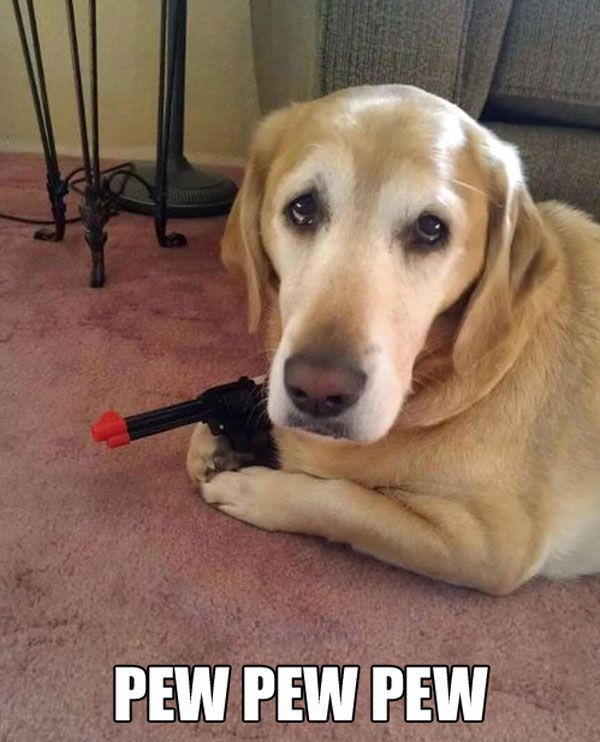 بالصور صور كلاب مضحكة , اضحك من قلبك مع اغرب الصور 3806 5
