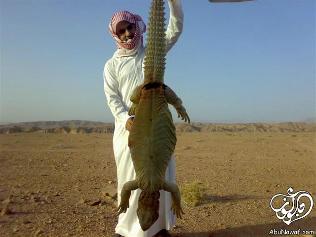 بالصور فندق في صحراء الربع الخالي 4126 10