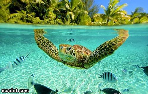 صورة اجمل سلحفاة في العالم , صور رائعة و منوعة