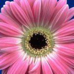 صور زهور جميله , احلى الورود الطبيعية