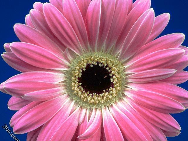 صوره صور زهور جميله , احلى الورود الطبيعية