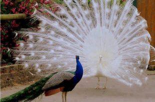 صور اجمل ما تراه العين , انظر عظمة و ابداع الخالق