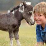اصغر حصان في العالم , صور نادة لا تصدق