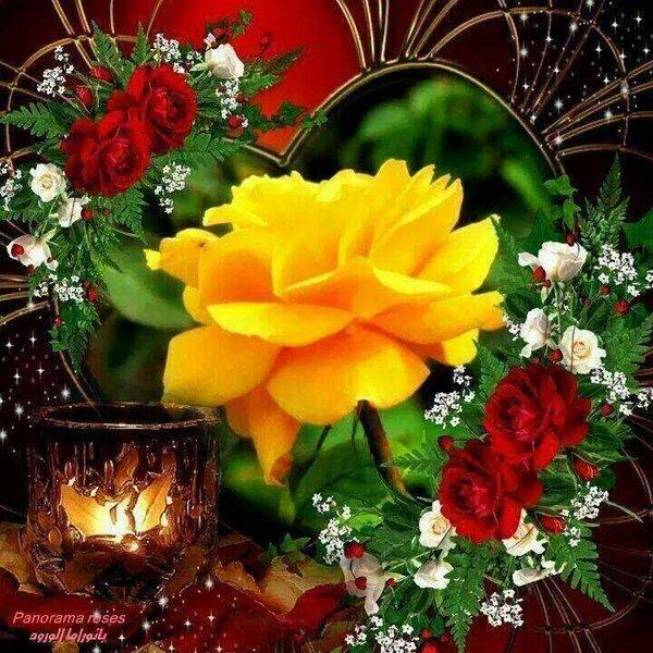 صورة ورد وفل وياسمين , الزهور اجمل هديه للتعبير عن الحب