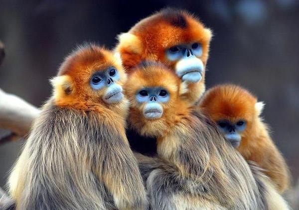 صورة اجمل حيوان في العالم , الحيوان اوفى صديق للانسان