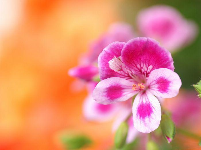 بالصور اجمل صور خلفيات للفيس بوك , اجدد صور للصفحه الشخصية 7556 4