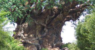 الشجرة العجيبة في الهند , اغرب الاشجار التى تراها