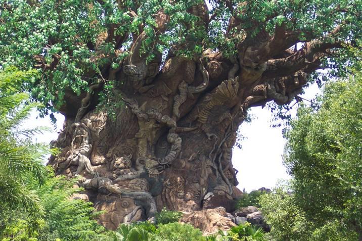 صوره الشجرة العجيبة في الهند   ,   اغرب الاشجار التى تراها