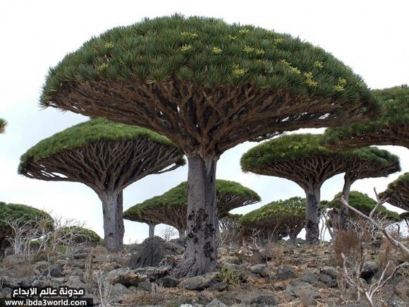 بالصور اغرب النباتات فى العالم , عجائب وعرائب و اشكال مختلفة 2840 10